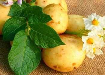 Как готовить картофель правильно