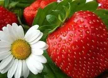 Растения для похудения